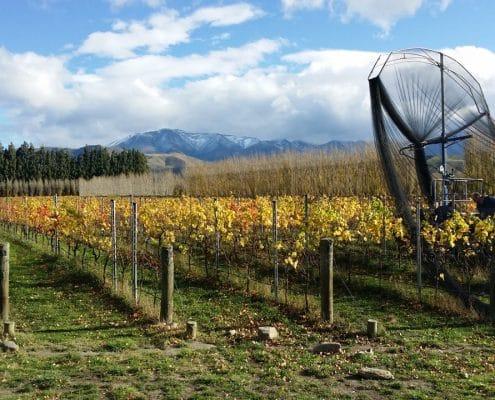 Pasquale Kurow Winery